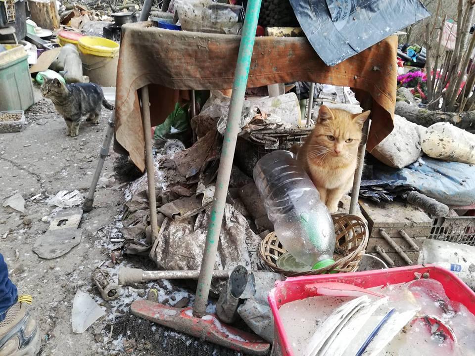Kočky jsou, společně se psy, nejčastějšími klienty Psího života